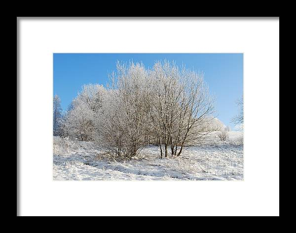 Snow Framed Print featuring the photograph Winter by Sarka Olehlova