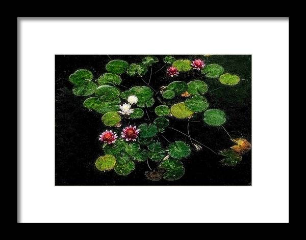 Asia Framed Print featuring the digital art 0151-lily - Embossed Sl by David Lange