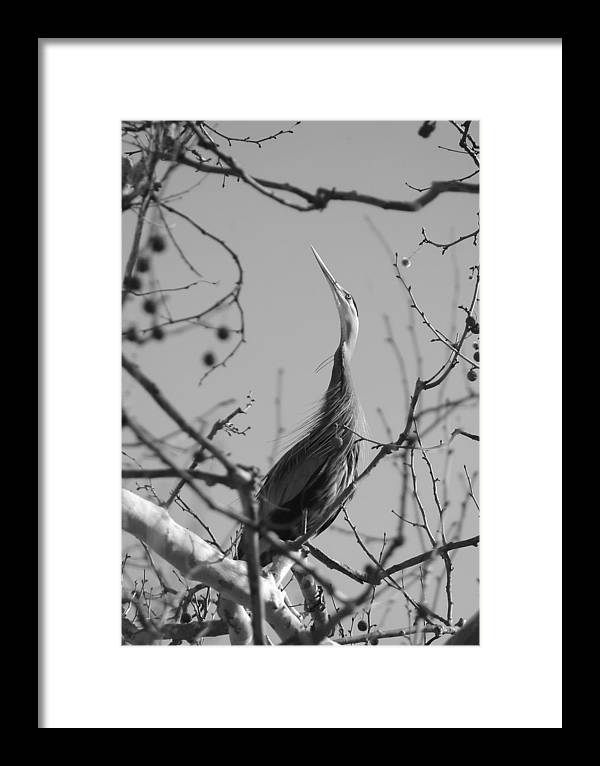 Bird Framed Print featuring the photograph 040510-9 by Mike Davis