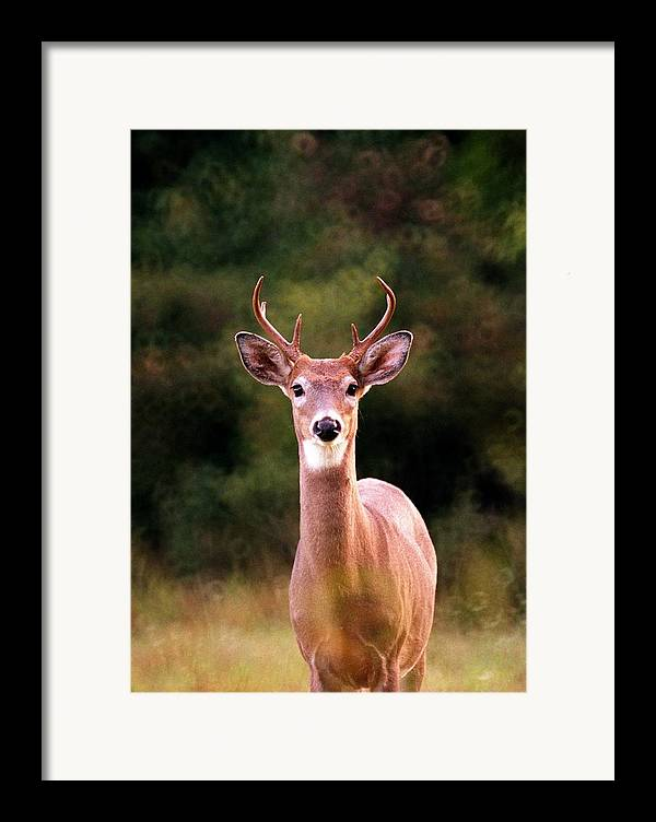 Deer Framed Print featuring the photograph 070306-34 by Mike Davis