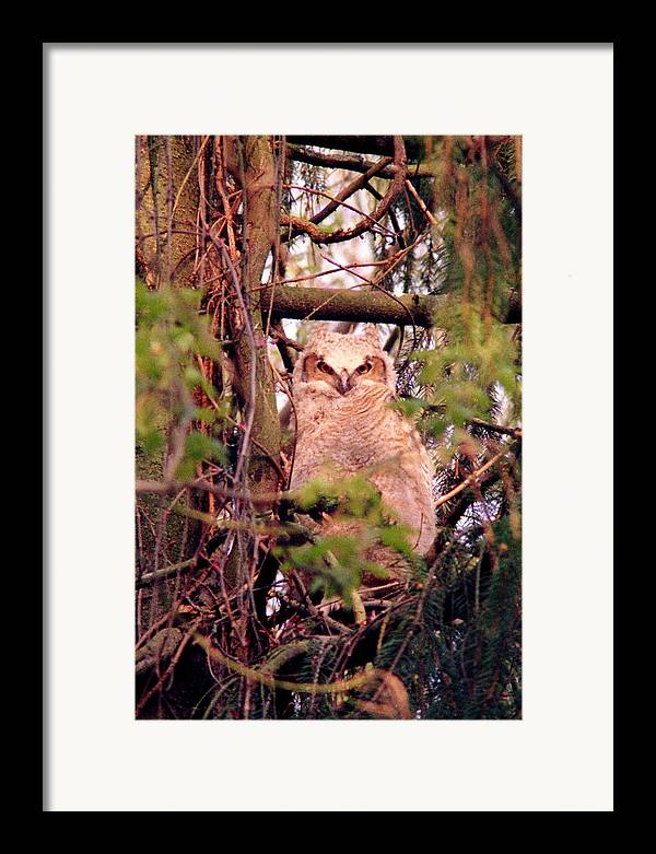 Owl Framed Print featuring the photograph 070406-31 by Mike Davis
