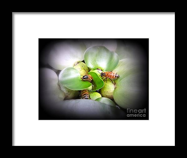 Honey Framed Print featuring the photograph 1 . 2 . 3 . Honeybees by Renee Trenholm