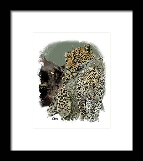 African Leopard Framed Print featuring the digital art African Leopard 2 by Larry Linton