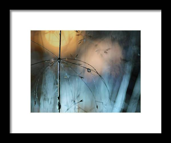 Macro Framed Print featuring the photograph Almost Dark by Heidi Westum