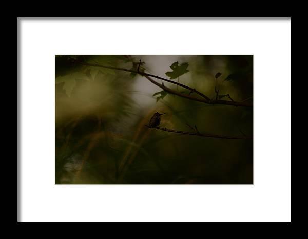 Hummingbird Framed Print featuring the photograph Alone by Lori Tambakis