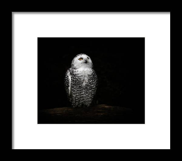 Animal Themes Framed Print featuring the photograph An Owl by Kaneko Ryo