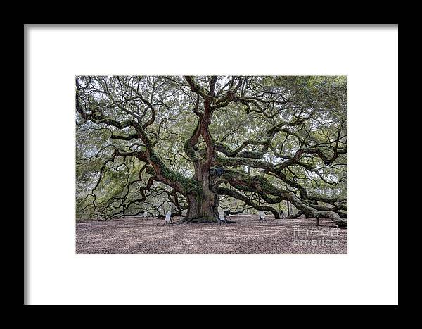 Angel Oak Tree Framed Print featuring the photograph Angel Tree by Dale Powell