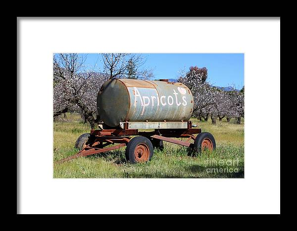 Apricot Framed Print featuring the photograph Apricots by Henrik Lehnerer