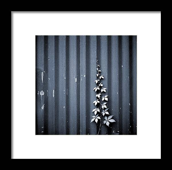 Steel Framed Print featuring the photograph Ascension by Thomas Shanahan