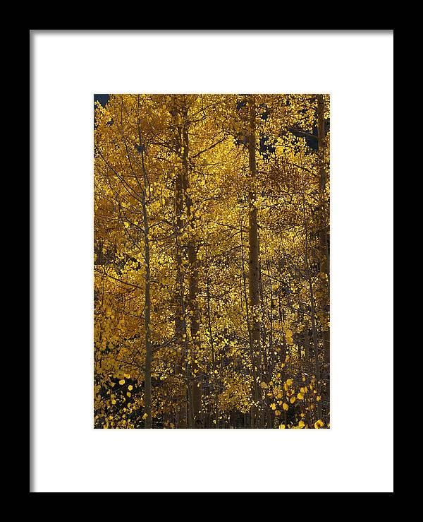 Aspen Framed Print featuring the photograph Aspen Glow Vertical by Julie Grandfield