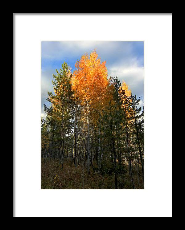 Aspens Framed Print featuring the photograph Aspens 9 2014 by Jim Painter