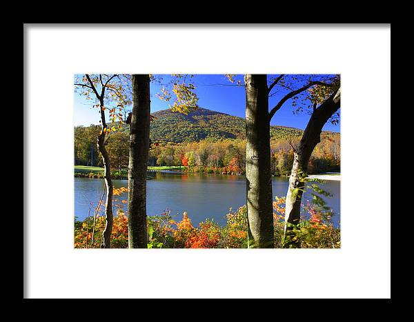 Autumn Framed Print featuring the photograph Autumn Trees 1 by Anne Barkley