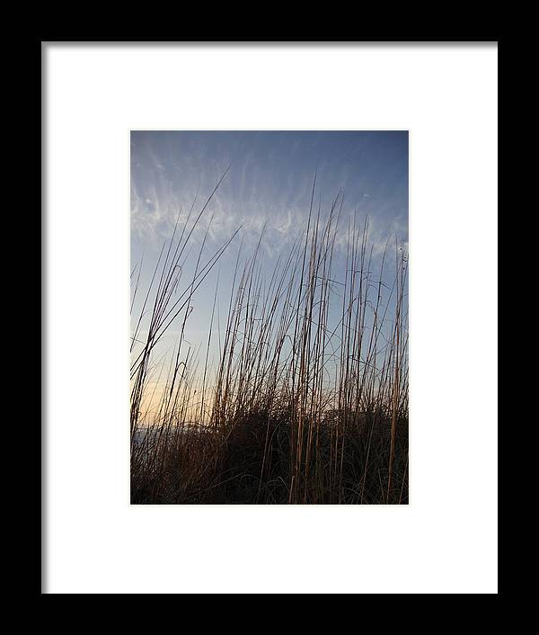 Reeds Framed Print featuring the photograph Beach Reeds by Pepsi Freund