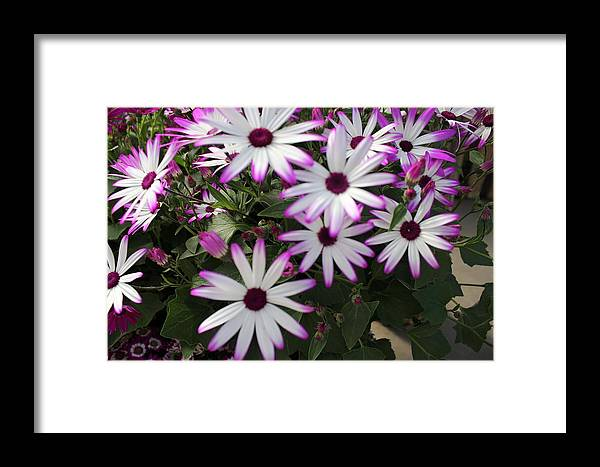 Floral Framed Print featuring the photograph Beautiful Faces by Shawn Hughes