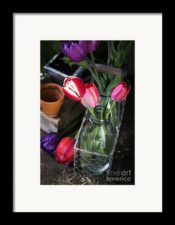 Barn Framed Print featuring the photograph Beautiful Spring Tulips by Edward Fielding