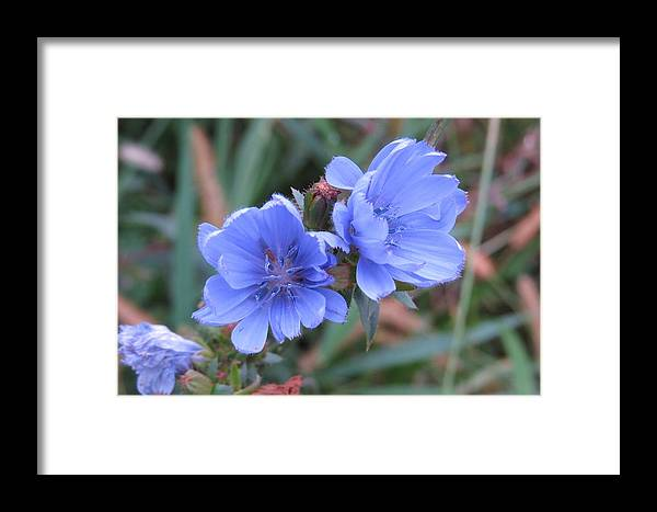 Flowers Framed Print featuring the photograph Beauty In The Meadow by Jeanette Oberholtzer
