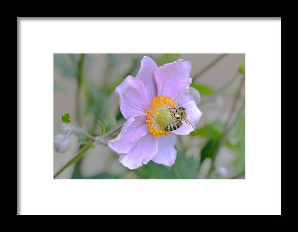 Insect Framed Print featuring the photograph Bee by Marian Heddesheimer