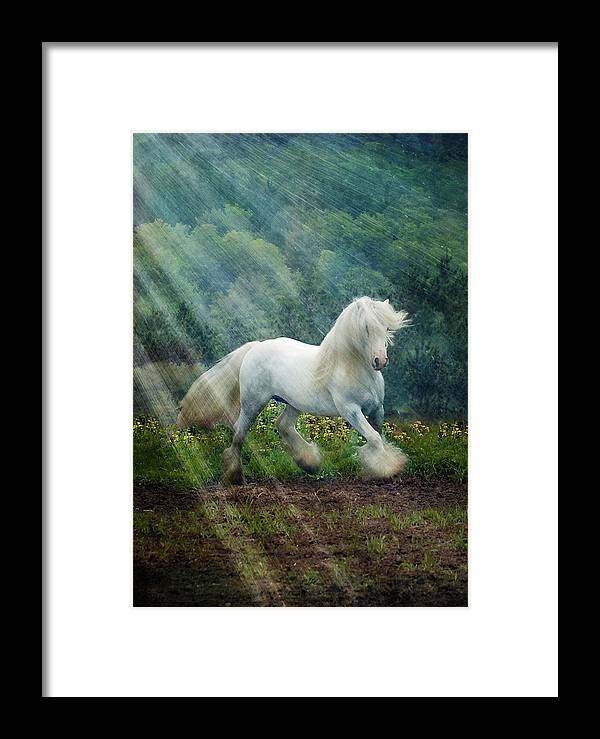 Horse Photographs Framed Print featuring the photograph Billy Rays by Fran J Scott