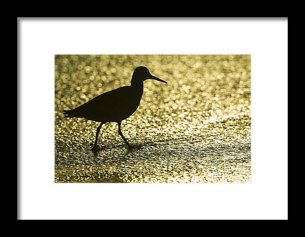 Nature Framed Print featuring the photograph Bird Silhouette by John Shaw