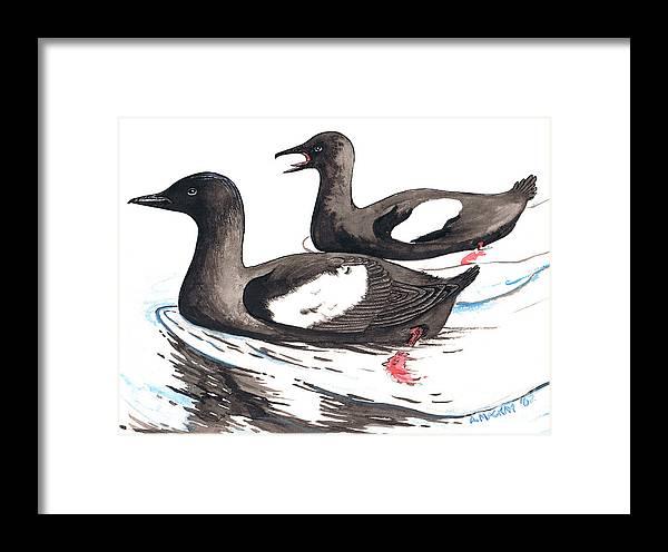 Black Guillemot Framed Print featuring the mixed media Black Guillemot by Art MacKay