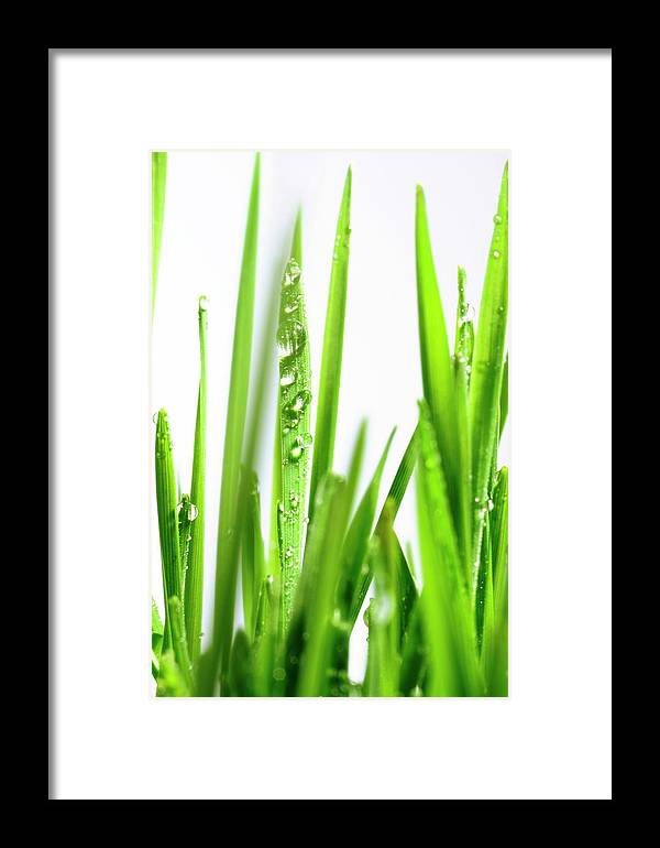 Agricultural Framed Print featuring the photograph Blades Of Wheatgrass With Water Droplets by Cordelia Molloy