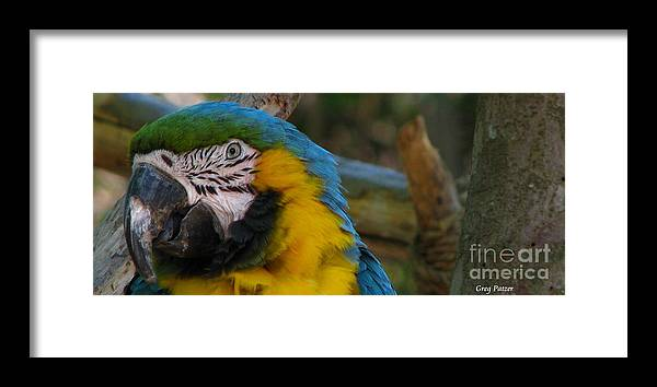 Patzer Framed Print featuring the photograph Blue And Gold by Greg Patzer