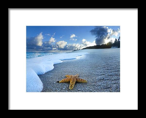 Surreal Framed Print featuring the photograph Blue Foam Starfish by Sean Davey