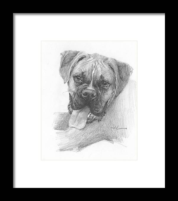 <a Href=http://miketheuer.com Target =_blank>www.miketheuer.com</a> Boxer Dog Pencil Portrait Framed Print featuring the drawing Boxer Dog Pencil Portrait by Mike Theuer