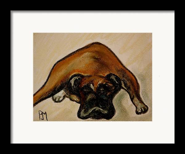 Boxer Framed Print featuring the drawing Boxer Down by Pete Maier