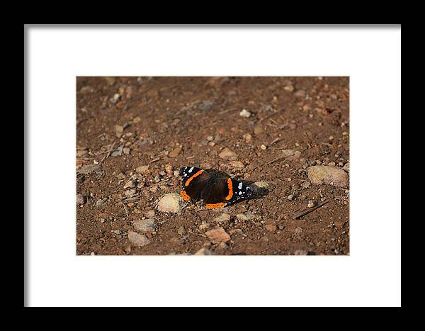 Bugs Framed Print featuring the photograph Bug Art 132 by Lawrence Hess