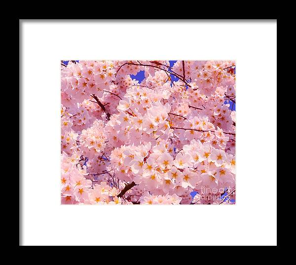 2012 Centennial Celebration Framed Print featuring the photograph Bursting With Blossoms by Jeff at JSJ Photography