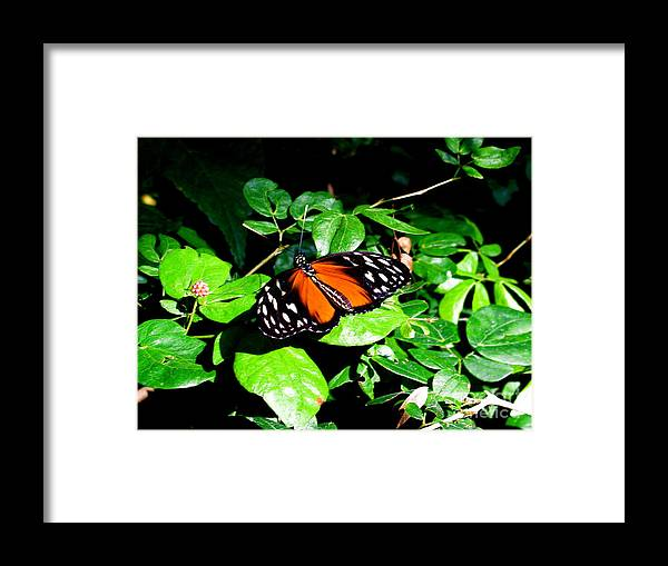 Butterfly Framed Print featuring the photograph Butterfly by Sherri Williams