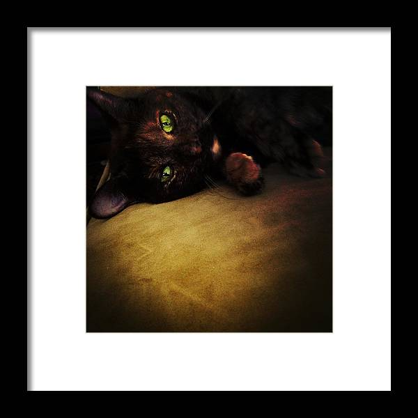 Cat Framed Print featuring the photograph Cat Eyes by Natasha Marco