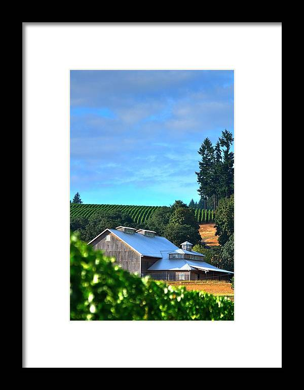 Hdr Framed Print featuring the photograph Chardonnay Vineyard 17954 by Jerry Sodorff