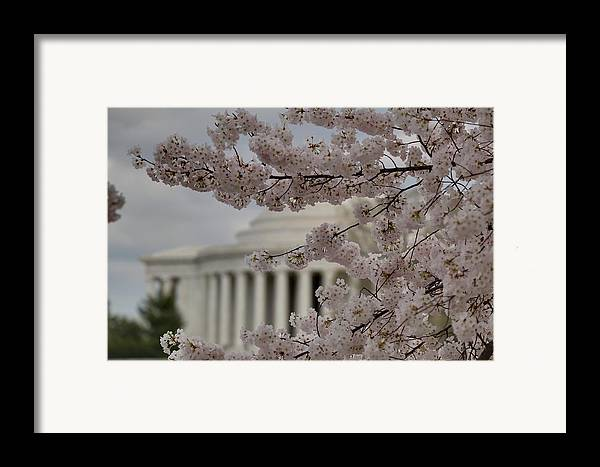America Framed Print featuring the photograph Cherry Blossoms With Jefferson Memorial - Washington Dc - 01134 by DC Photographer