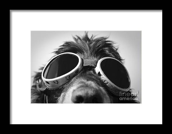 Dog Framed Print featuring the photograph Cool Dog by Mats Silvan