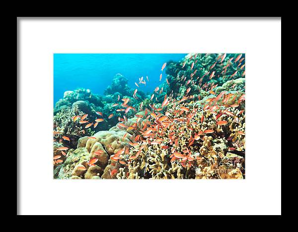 Underwater Framed Print featuring the photograph Coral Reef by MotHaiBaPhoto Prints