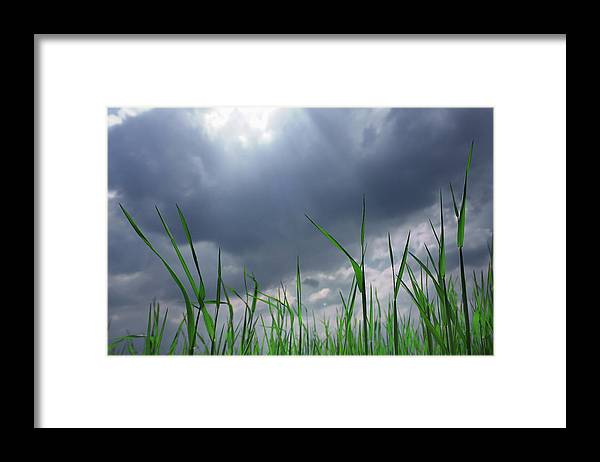 Thunderstorm Framed Print featuring the photograph Corn Plant With Thunderstorm Clouds by Silvia Otte
