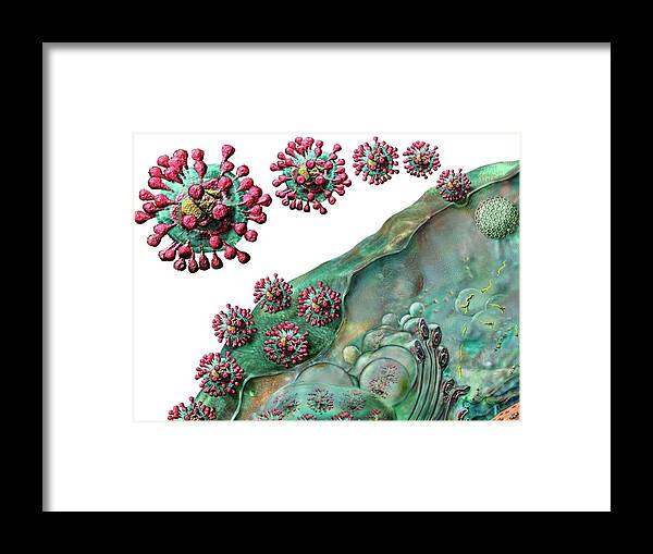 Coronavirus Life Cycle by Russell Kightley/science Photo Library