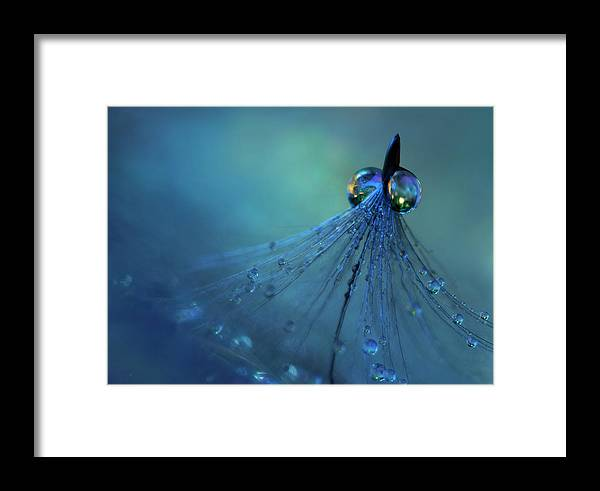 Blue Framed Print featuring the photograph Dancing Into The Blue Night by Heidi Westum