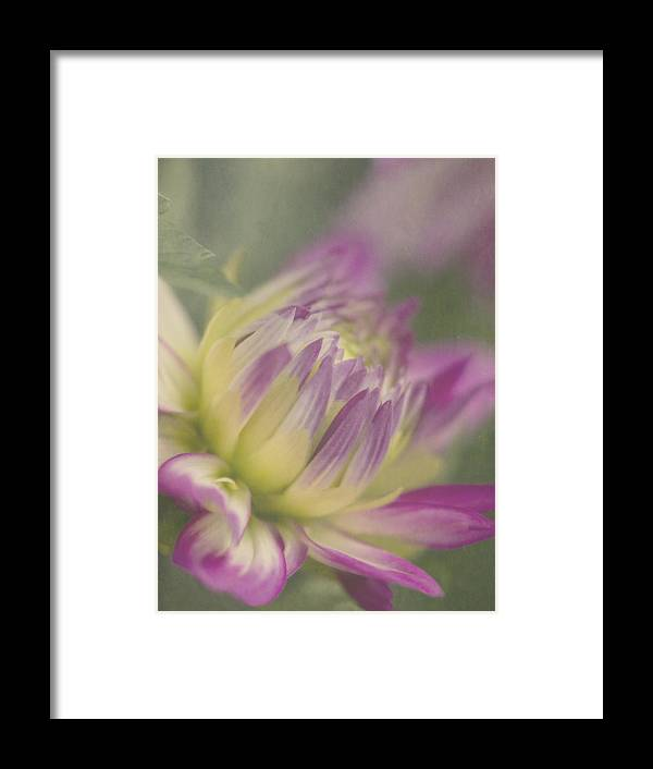 Dreamy Framed Print featuring the photograph Dreamy Dahlia by Cheryl Butler