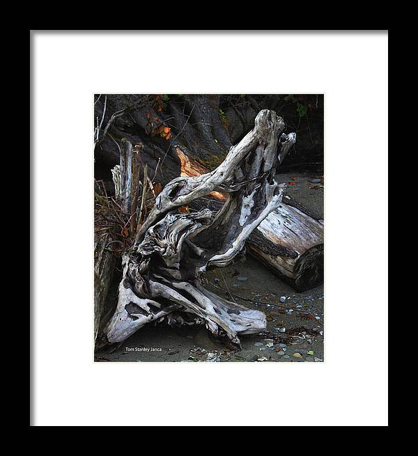 Driftwood On The Beach Framed Print featuring the photograph Driftwood On The Beach by Tom Janca