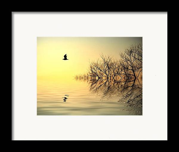 Tree Silhouettes Framed Print featuring the photograph Dusk Flight by Sharon Lisa Clarke
