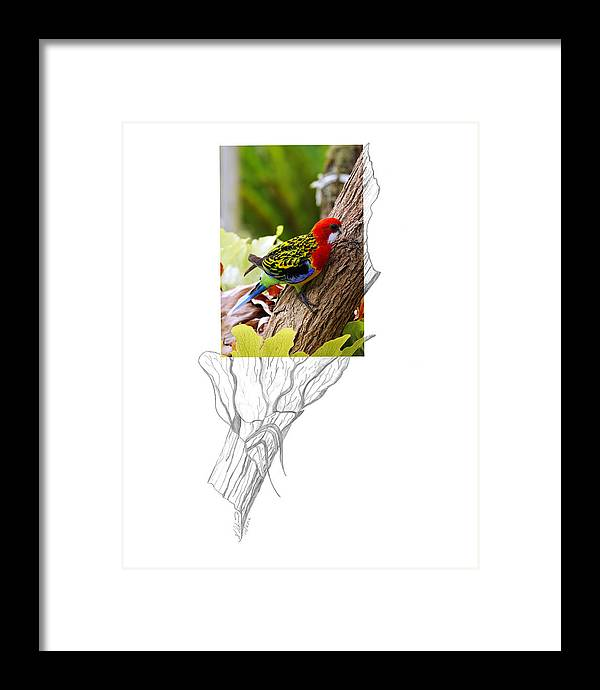 Eastern Rosella Framed Print featuring the photograph Eastern Rosella 2AM-9396 by Andrew McInnes