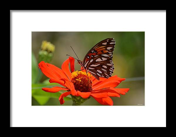 Encapturing Beauty Framed Print featuring the photograph Encapturing Beauty by Maria Urso