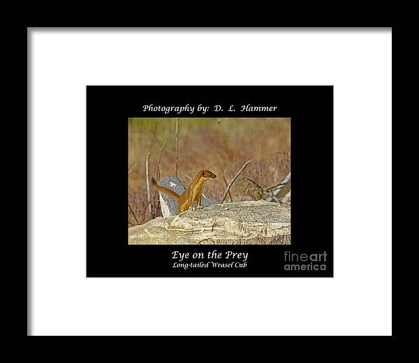Wildlife Framed Print featuring the photograph Eye On The Prey by Dennis Hammer