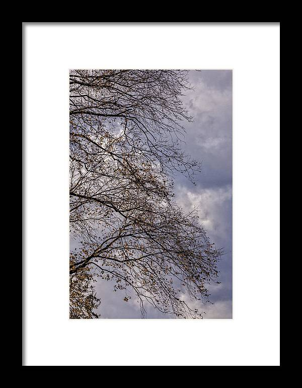 Fall Foliage Framed Print featuring the photograph Fall Trees by Robert Ullmann