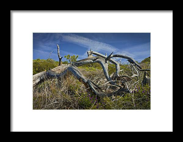 Art Framed Print featuring the photograph Fallen Dead Torrey Pine Trunk At Torrey Pines State Natural Reserve by Randall Nyhof