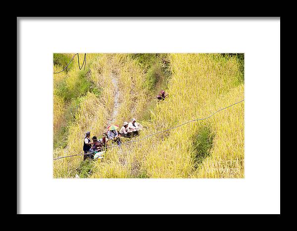 Rice Framed Print featuring the photograph Farmers At Rice Field by Tuimages
