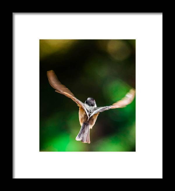 Framed Print featuring the photograph Fast Flight by Brian Stevens